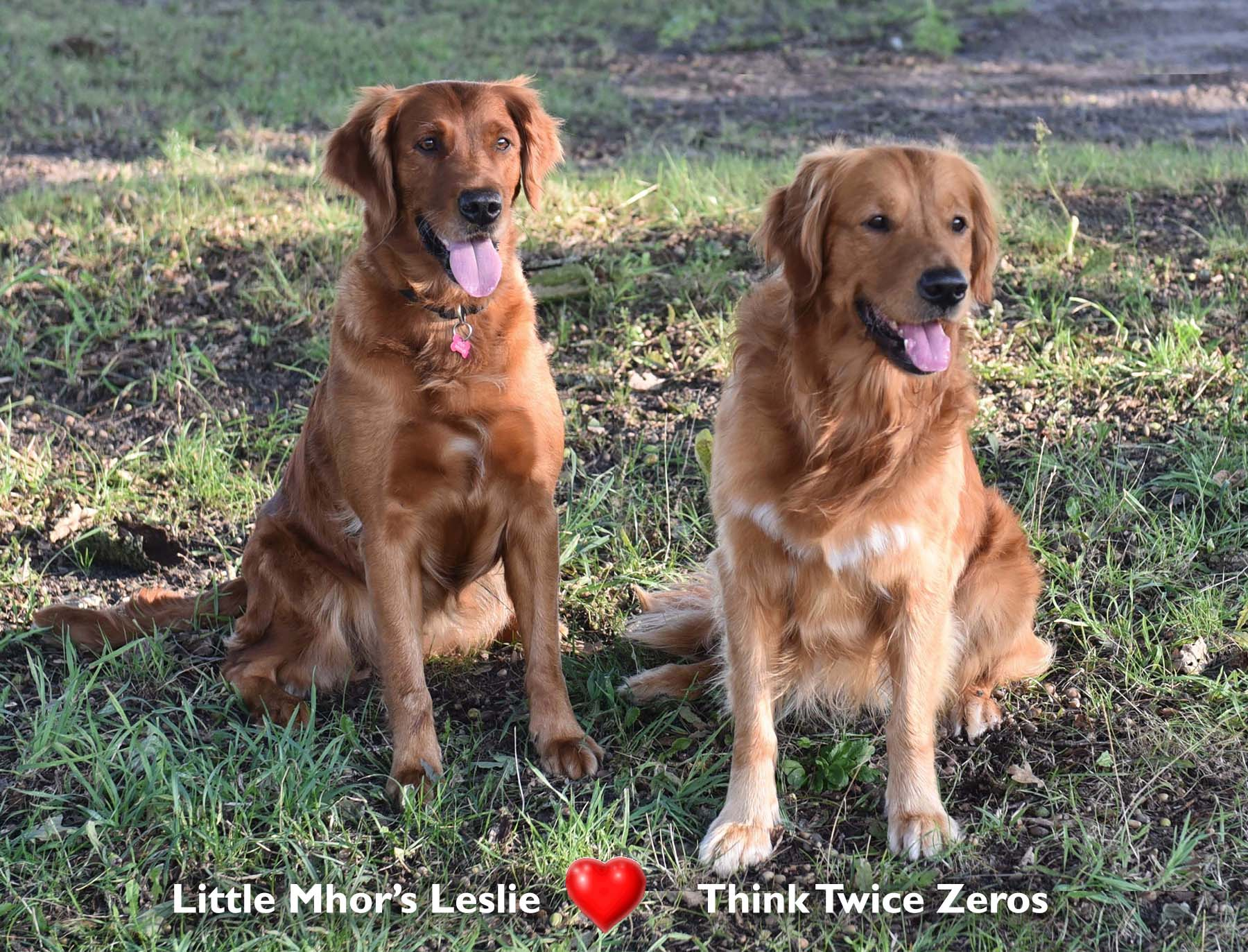Little Mhor's Leslie - Think Twicw Zeroes